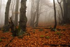 Free Foggy Forest In Giant Mountains Royalty Free Stock Images - 1005709