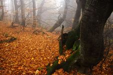 Free Foggy Forest In Giant Mountains Royalty Free Stock Photo - 1005845