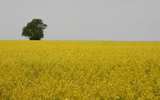 Free Yellow Landscape Stock Photography - 1005882
