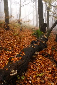 Free Foggy Forest In Giant Mountains Royalty Free Stock Photography - 1005887