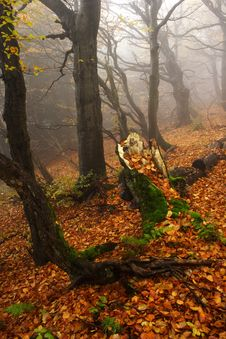 Free Foggy Forest In Giant Mountains Stock Photography - 1005932