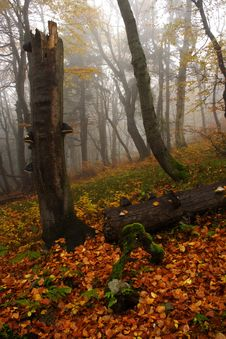Free Foggy Forest In Giant Mountains Stock Images - 1006014