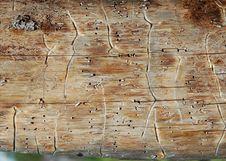 Free Pine Plank Royalty Free Stock Photo - 1007135