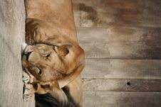Free Lion Stock Images - 1007684
