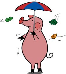 Rainy Pig Royalty Free Stock Image