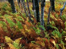 Free Ferns And Trees Stock Image - 1009041