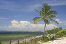 Free Palm Tree Water And Sky Stock Photos - 1009113