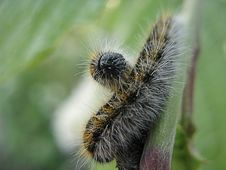 Two Caterpillar Stock Photography