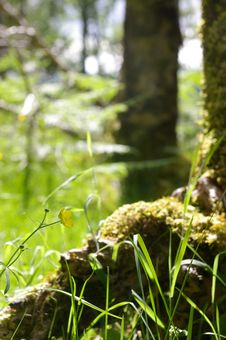 Free Moss On Root Stock Image - 1009181