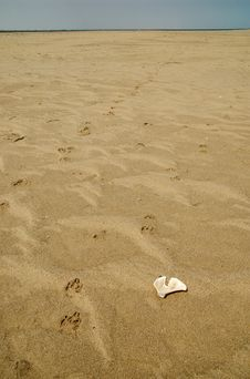 Hyaena Track And Bone At The Beach Stock Photography