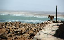Free Jackal On The Hunt Stock Photography - 1009442
