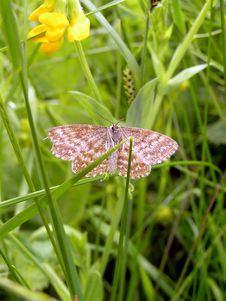 Free Moth Stock Images - 1009604