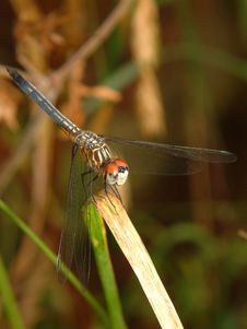 Free Dragonfly Stock Photo - 1009830