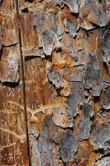 Free Pine Plank Stock Photo - 1009900