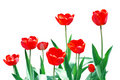 Free Tulips Frame Floral Template Stock Photo - 10000580
