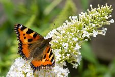 Butterfly Sitting On A Flower In Spring Royalty Free Stock Photography