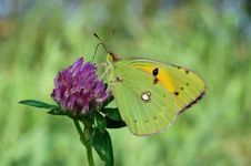 Free Green Butterfly Royalty Free Stock Photo - 10001015