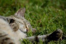 Free Sleeping Cat Stock Photography - 10001902