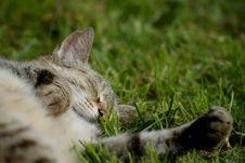 Free Sleeping Cat Stock Photography - 10001902