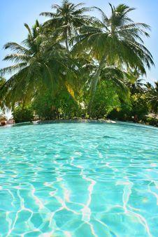 Free Swimming Pool Royalty Free Stock Image - 10002666