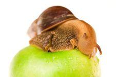Free Snail On Green Apple Stock Photos - 10003893