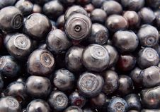 Free Blueberries Royalty Free Stock Images - 10004879