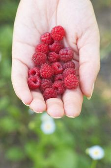 Free Raspberry On Woman Hand Stock Photography - 10006352