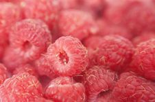 Free Raspberry Stock Images - 10006374