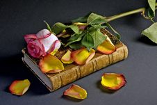 Free Pink Rose And Yellow Petals Above An Ancient Book Stock Photos - 10006623