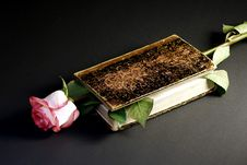 Pink Rose And An Ancient Book Stock Image