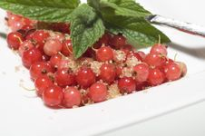 Free Redcurrant Berries Royalty Free Stock Images - 10008209
