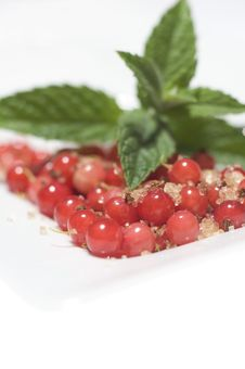 Free Redcurrant Berries Royalty Free Stock Photos - 10008228
