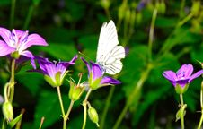 Free Butterfly And Flowers Royalty Free Stock Images - 10008869