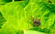 Free The Spider Stock Photos - 10008883