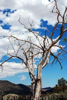 Free Dead Tree In Desert Stock Image - 10009691