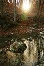 Free Woods Sunset Stock Image - 10018571