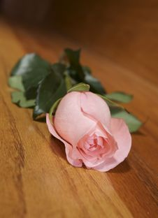 Free Pink Rose On A Wooden Backround Royalty Free Stock Images - 10010059