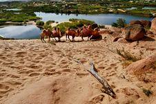 Free Desert Near Oasis Stock Image - 10011371