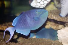 Free Tropical Fish Stock Images - 10011494
