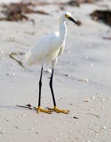 Free Bird Royalty Free Stock Photos - 10012378