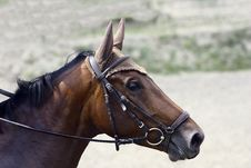 Free Horse Profile Stock Photo - 10013090