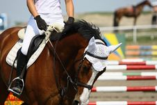 Free Horse On Race Royalty Free Stock Image - 10013146