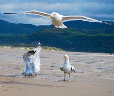 Free Seagulls Stock Photo - 10013550