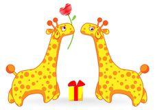 Free Giraffe Stock Image - 10013921