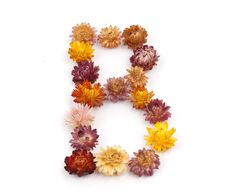 Free Floral Alphabet Stock Images - 10014764