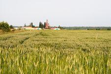 Free Grain Royalty Free Stock Photos - 10015058