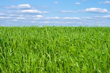 Green Grass Field With Blue Sky Stock Photos