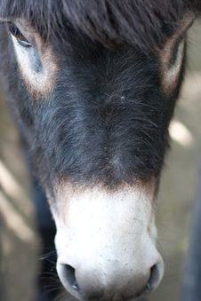 Free Donkey Closeup Stock Photography - 10016262