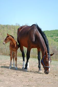 Free Mare And Colt On A Ranch Stock Photography - 10016362
