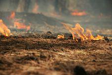 Free Burning Needles Royalty Free Stock Photo - 10018745
